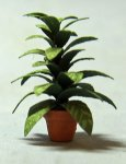 Aglaonema in a Terra Cotta Pot Quarter-inch scale