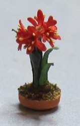 Amaryllis in a Terra Cotta Bulb Pot Quarter-inch scale