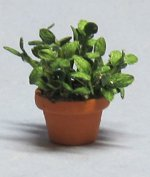Herb-Basil Plant in a Terra Cotta Pot Half-inch scale