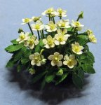 Christmas Rose Half-inch scale