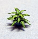 Boston Fern in a Bead 1/144th scale