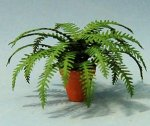 Boston Fern in a Terra Cotta Pot One-inch scale