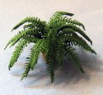 Boston Fern in a Terra Cotta Pot Quarter-inch scale