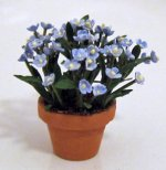 Forget-Me-Not in a Terra Cotta Pot One-inch scale