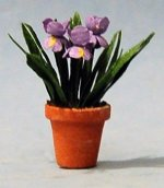 Iris in a Terra Cotta Pot Half-inch scale