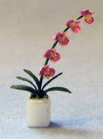 Phalaenopsis Orchid in a Pot Quarter-inch scale
