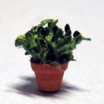 Herb-Oregano Plant in a Terra Cotta Pot Quarter-inch scale