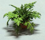 Herb-Parsley Plant in a Terra Cotta Pot Half-inch scale