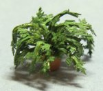 Herb-Parsley Plant in a Terra Cotta Pot Quarter-inch scale