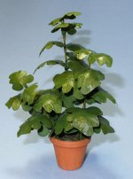 Split-Leaf Philodendron in a Terra Cotta Pot One-inch scale