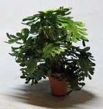 Lacy Philodendron in a Terra Cotta Pot Half-inch scale