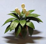 Spathiphyllum in a Terra Cotta Pot One-inch scale