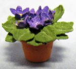 African Violet in a Terra Cotta Pot Half-inch scale