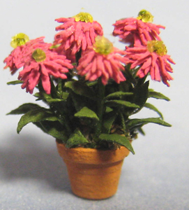Zinnia, Cactus Flowered in a Terra Cotta Pot Quarter-inch scale